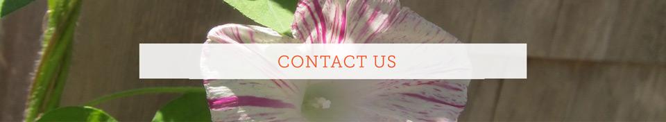 ContactUsWeb.jpg