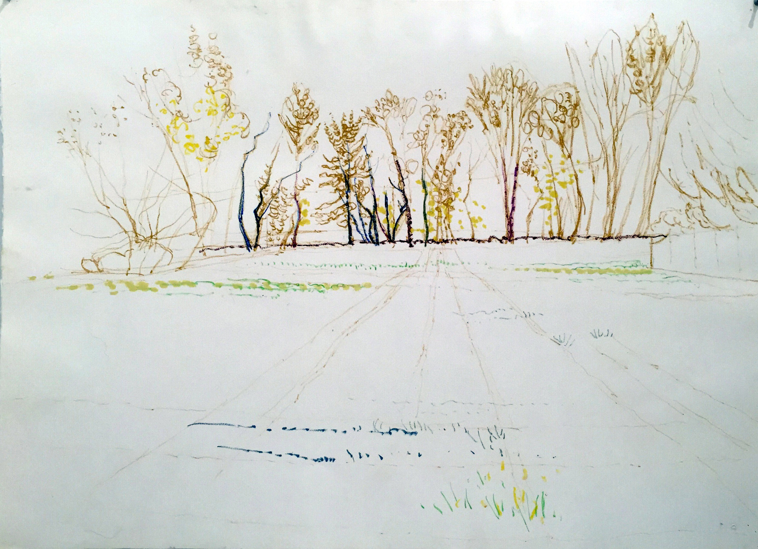 FIELD AND TREES ON COTTAGE STREET 29.5X41.5