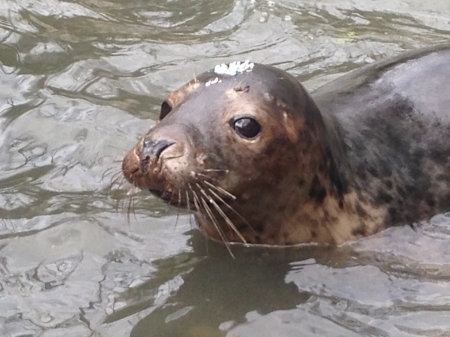 Phonetic Planet Seal Rescue Ireland 1
