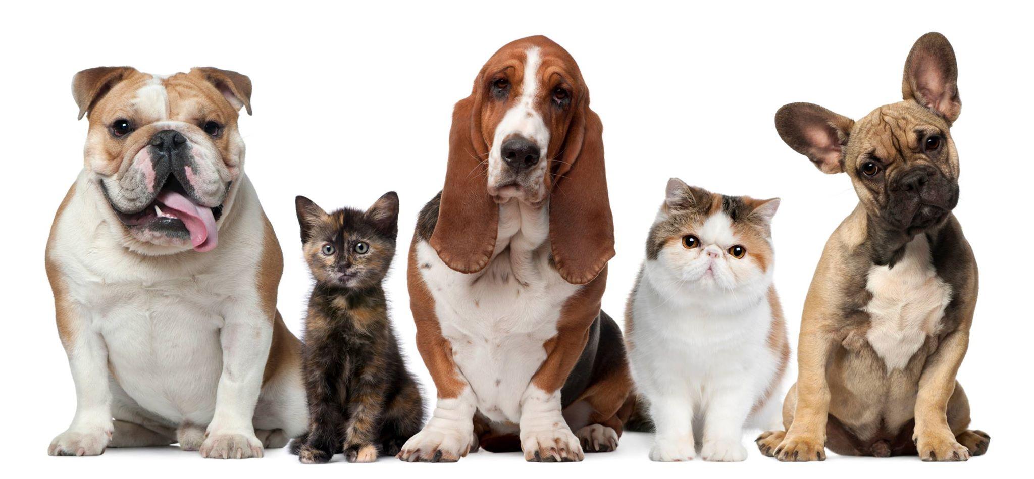 dog-and-cat-days.jpg