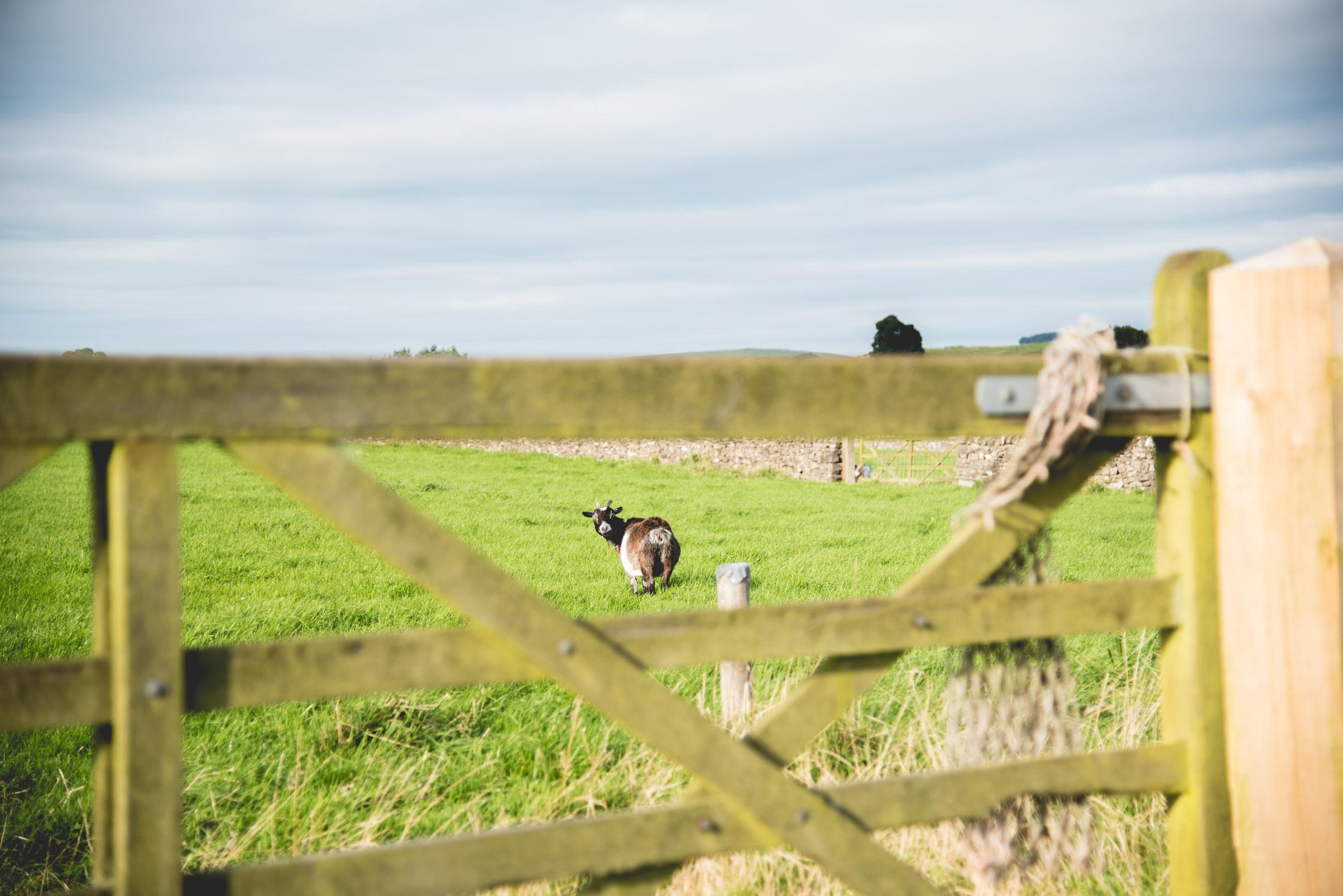 Peak+district+farm+wedding+lower+damgate+photographer-180.jpg