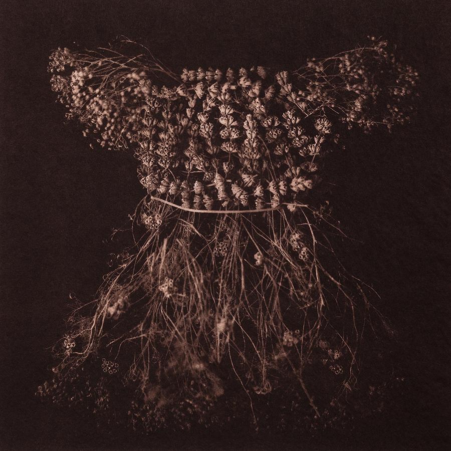 "Untitled 11, 2015, 10""x10"", Gold toned Vandyke Brown print on kozo"