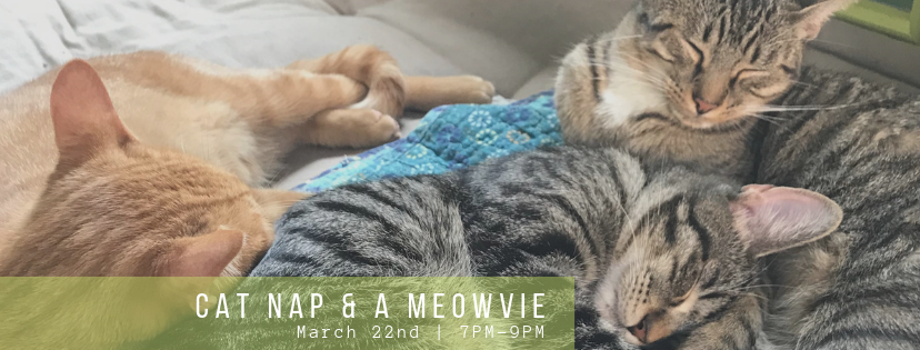 Cat Nap and a Meowvie.png