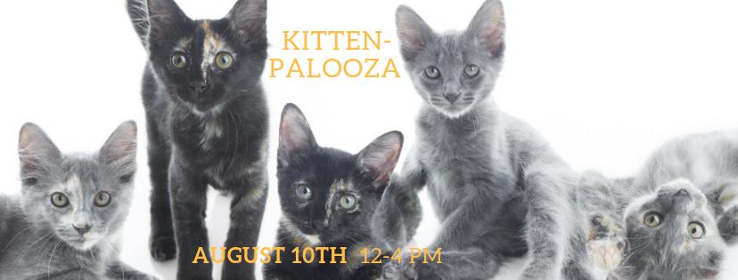 kittenpalooza.png
