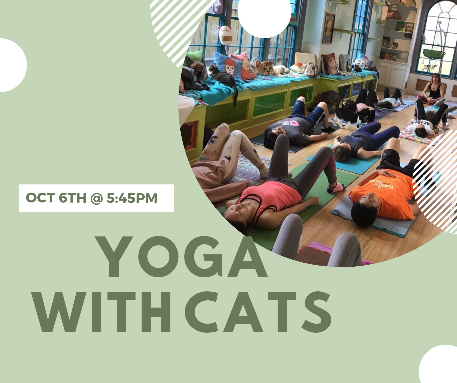 Yoga with cats.png