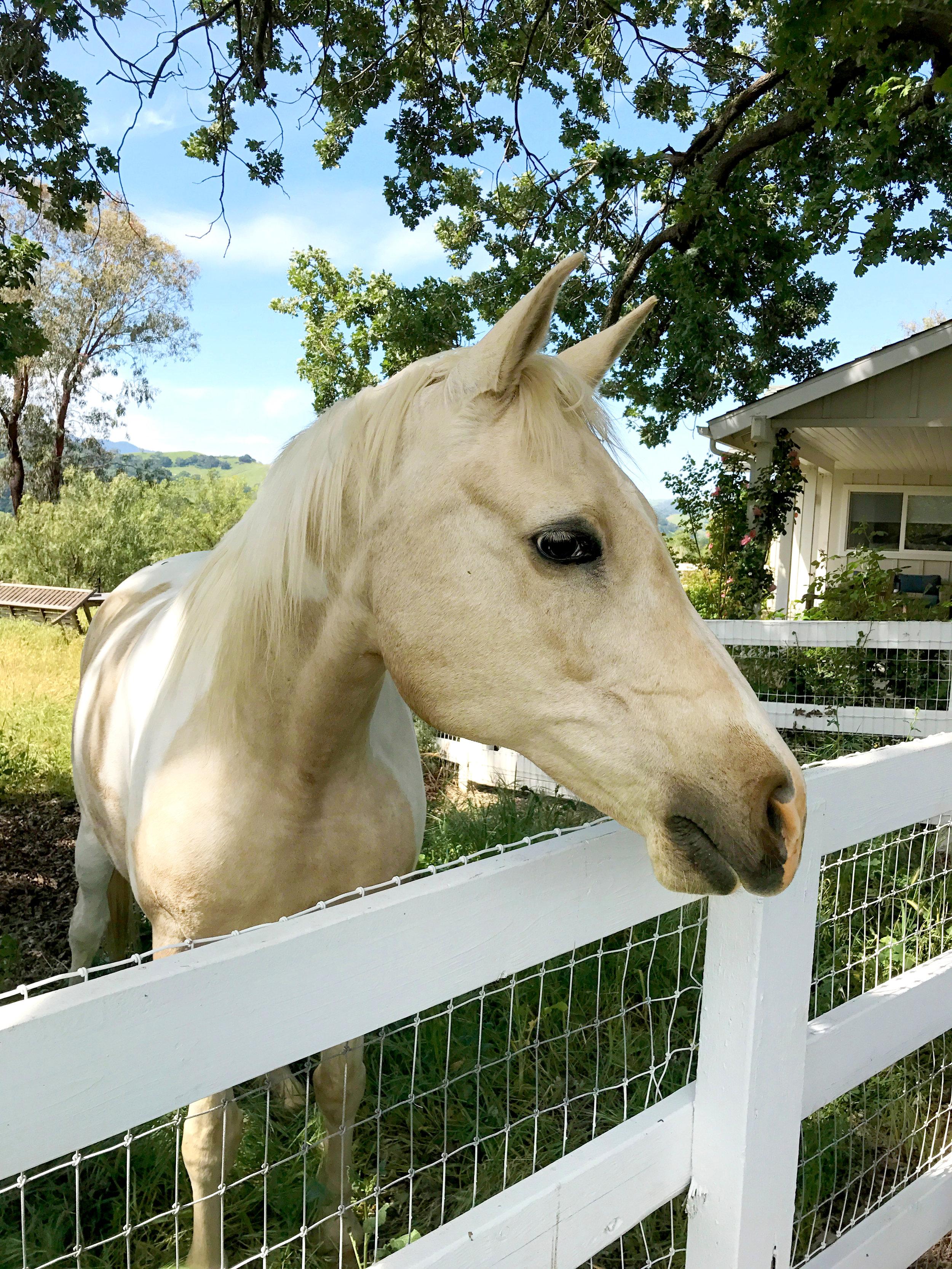 horse advertisement.jpg