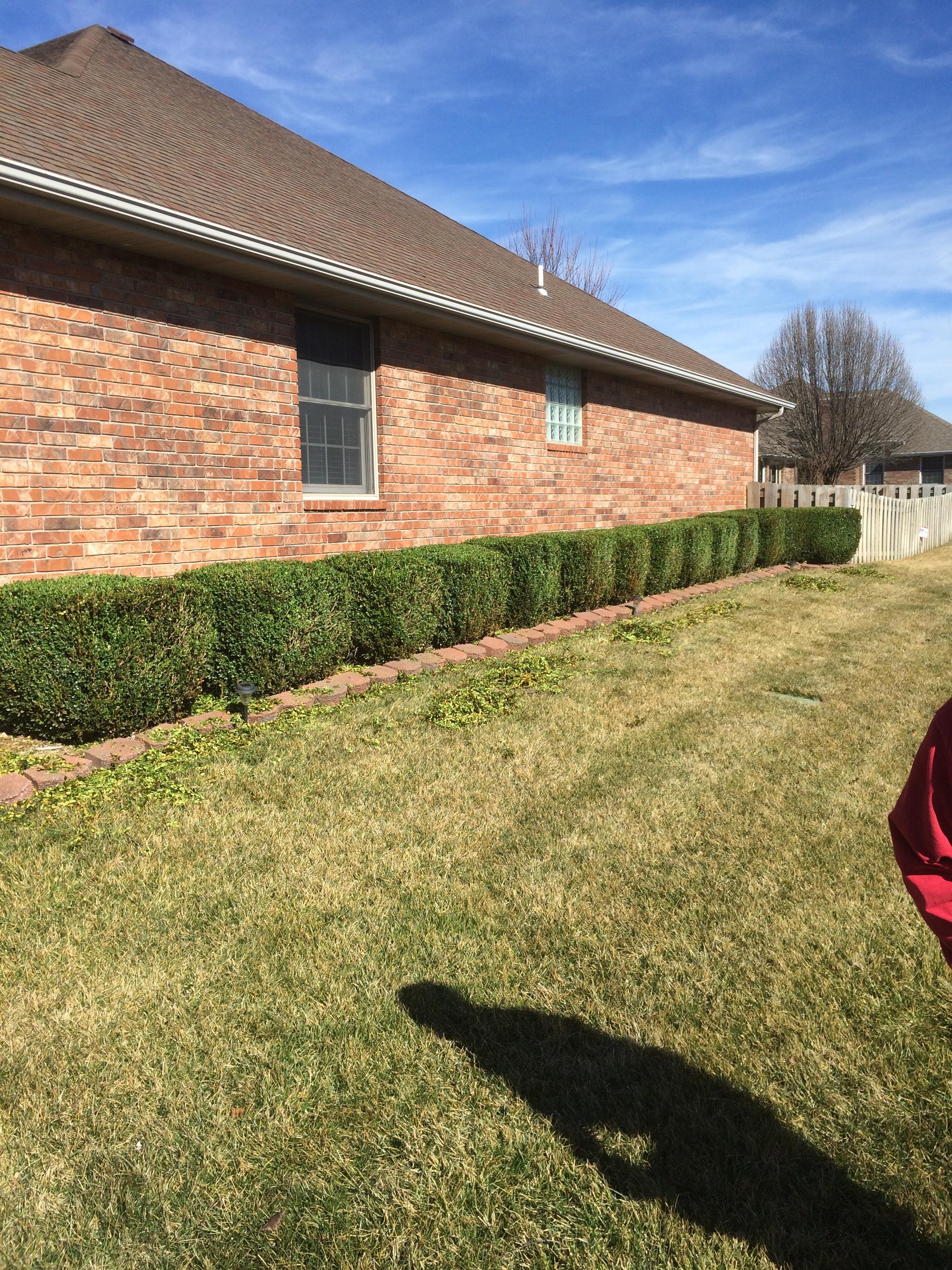 shrubs1.JPG