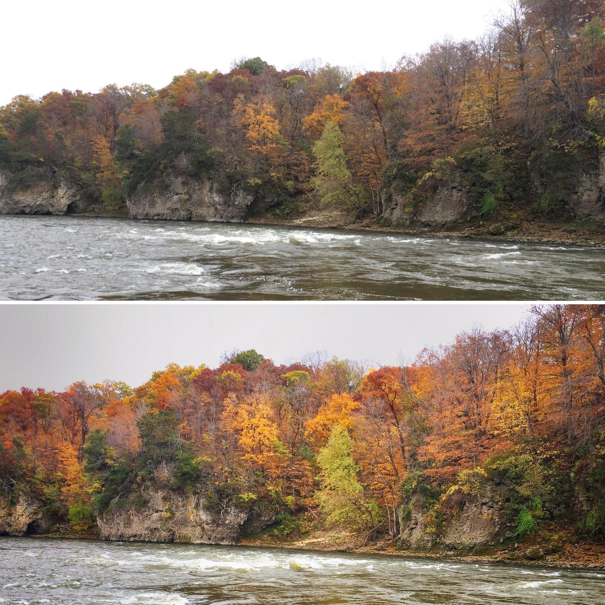 fall colors along cedar river.jpg