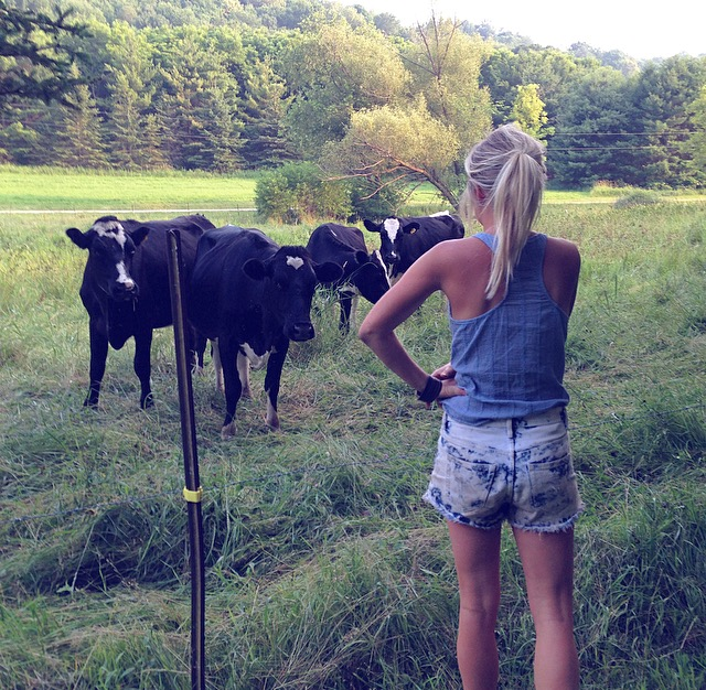 The ladies who graze on my family's land