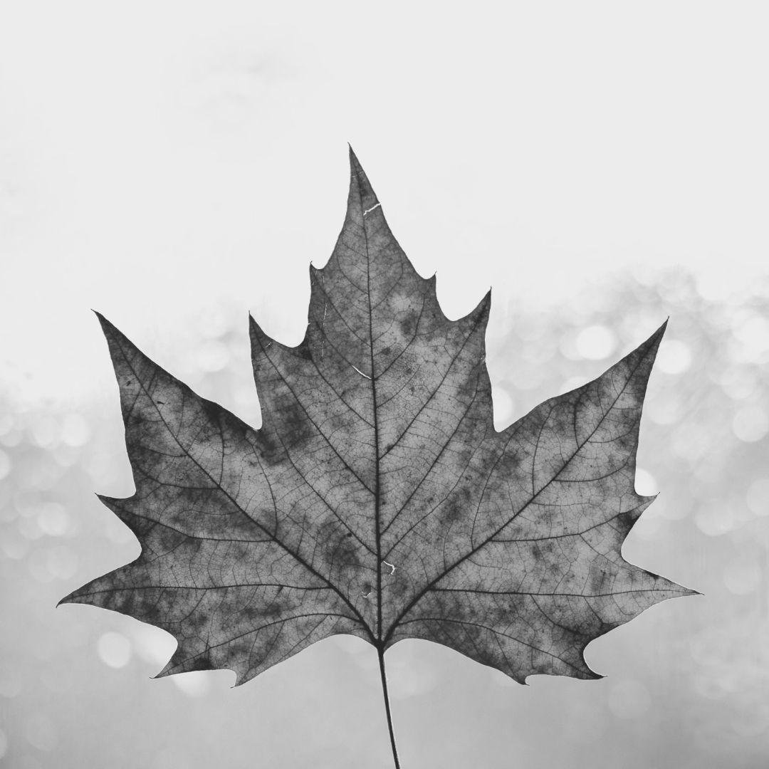 canada day collingwood owen sound