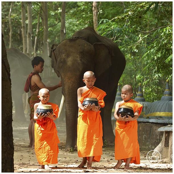 Buddist boys in Thailand. Let us arrange your tour and experience firsthand all the best Thailand has to offer.  #zenluxurytravels #traveltheworld #thailand #travel #instatravel #travelgram #tourism #passportready #travelblogger #wanderlust #ilovetravel #writetotravel #instatraveling #instavacation #instapassport #postcardsfromtheworld #traveldeeper #travelling #trip #igtravel #getaway #instago #holiday #globetrotter #changebeginshere #rejsemedsjæl #sundhedsrejser
