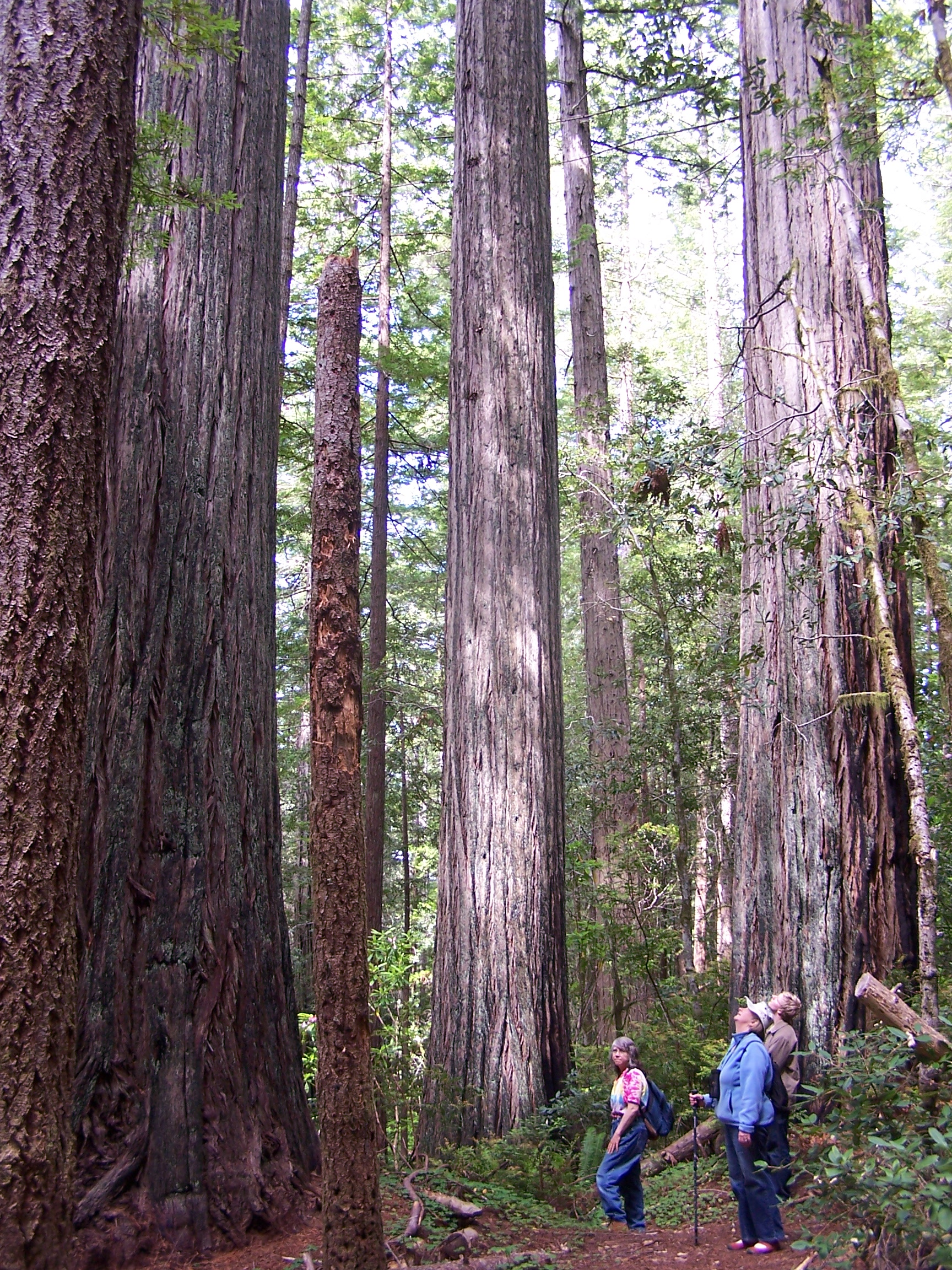 The Oregon Redwoods is part of the National Forest System, but deserves better systematic protection. Should parts or all of it be part of the National Park System, a National Recreation Area System, National Wilderness Preservation System, National Wild and Scenic Rivers System, and/or National Trails System?  Photo: Wendell Wood, Oregon Wild.