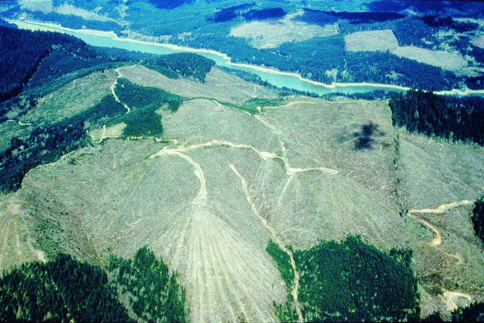 Logging in Lane County, Oregon on both public and private lands.  Source: Elizabeth Feryl, Environmental Images.