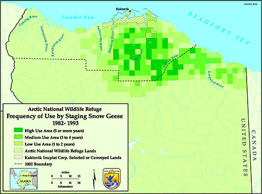 Snow goose staging in the 1002 area. The darker the green, the higher the use.  Source: US Fish and Wildlife Service