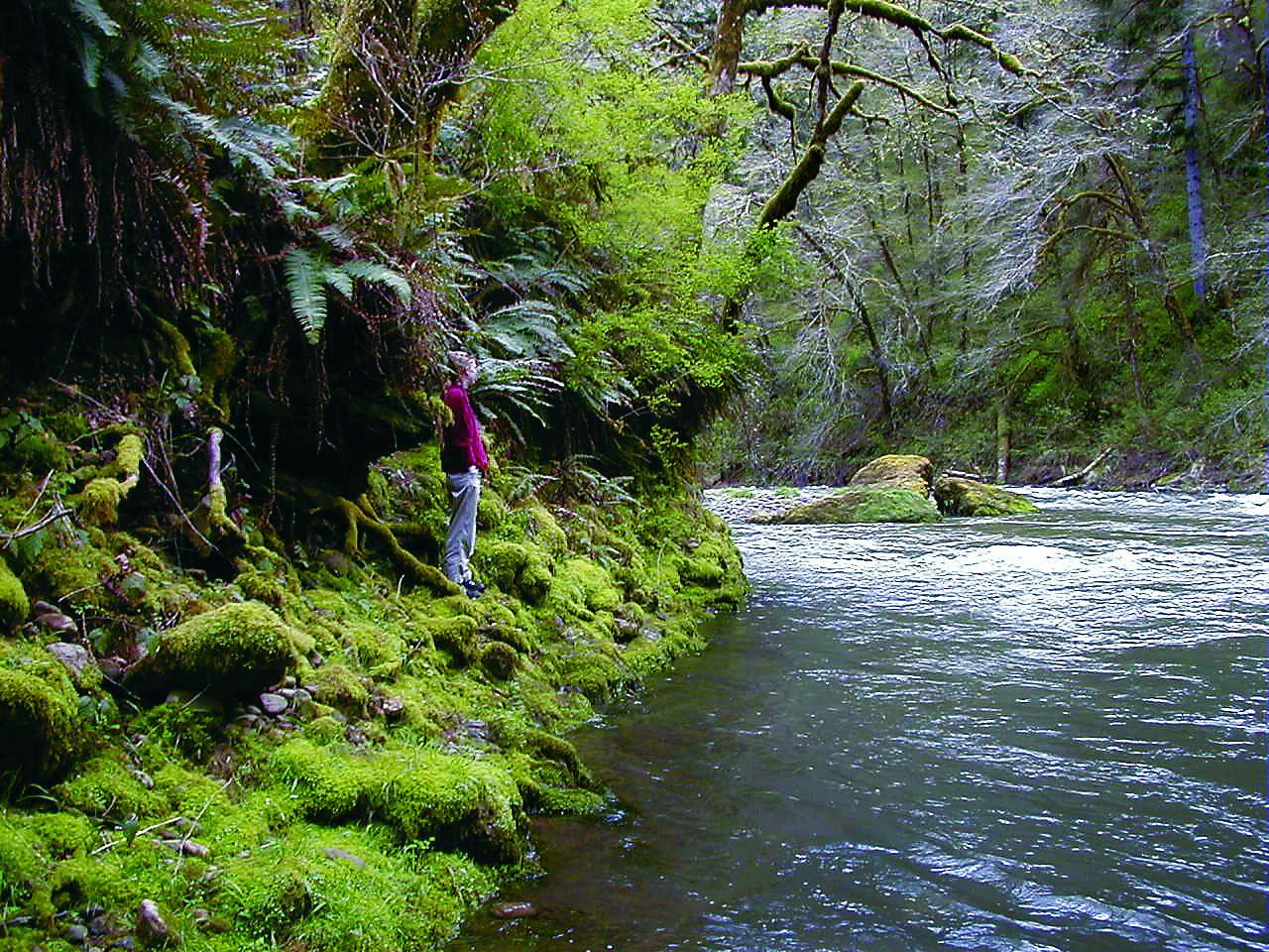 The Nestucca River within the proposed Mount Hebo Wilderness in the Oregon Coast Range . Source: Erik Fernandez, Oregon Wild.