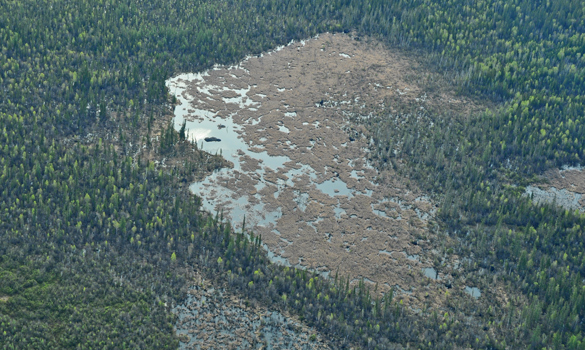 - Figure 11. At ~850 meters in length, the world's largest known beaver dam is in Alberta in Wood Buffalo National Park.Source: Parks Canada.