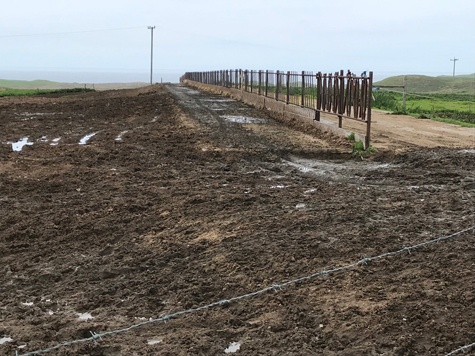- Fig. 3. A government-owned, privately leased feedlot on the L Ranch in Point Reyes National Seashore. Source: Restore Point Reyes National Seashore.