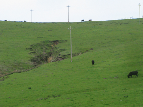 - Fig. 6. Bovine-caused headcut erosion with introduced Mediterranean grasses, which are closely grazed on the Home Ranch in Point Reyes National Seashore. Source: Restore Point Reyes National Seashore.