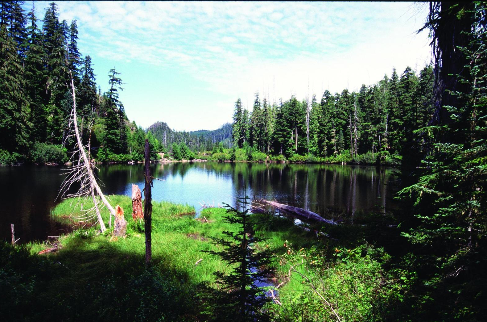 Fig. 1.  Crabtree Lake in Crabtree Valley, which contains some of the oldest trees in Oregon, is in the proposed Douglas Fir National Monument, located in Oregon's Cascade Mountains.  Source: David Stone, Wildlands Photography. Previously appeared in   Oregon Wild: Endangered Forest Wilderness     (Timber Press, 2004), by the author.