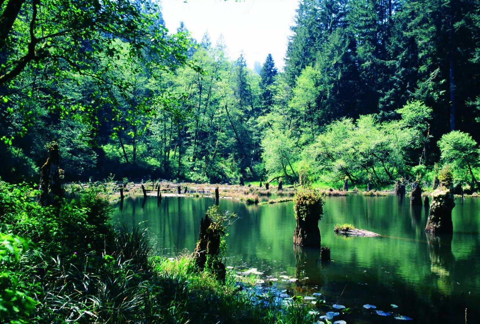 - Figure 1. Wasson Lake in the Devil's Staircase Wilderness, established in 2019. Source: George Wuerthner, first appearing in the author's book Oregon Wild: Endangered Forest Wilderness (Timber Press, 2004).