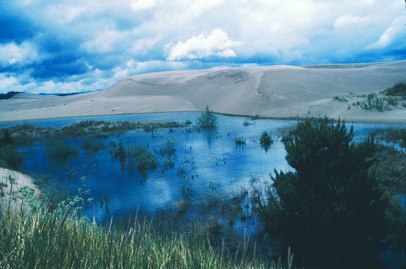 Figure 4.  A dunal wetland in the Oregon Dunes National Recreation Area. Wetlands, lakes, and streams in the recreation area would be unique additions to the National Wild and Scenic Rivers System.  Source: Dominic DeFazio. First appeared in   Oregon Wild: Endangered Forest Wilderness     by the author.
