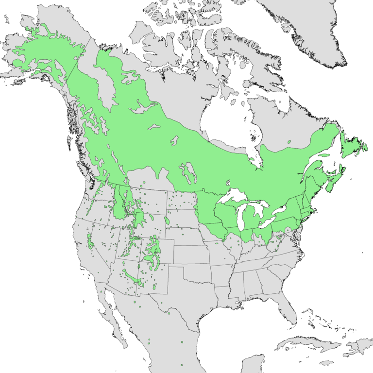 Map 1.  The range of quaking aspen ( Populus tremuloides ).  Source:  Wikipedia .