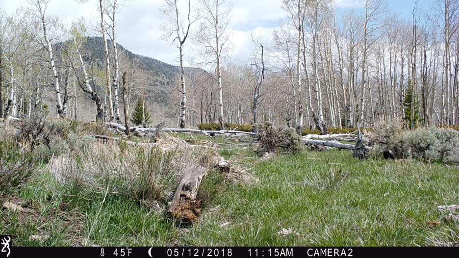 Figure 6.  Camera 2 on May 12, 2018, at 45°F. Spring hasn't yet fully sprung, but it is springing.  Source:  Western Watersheds Project .