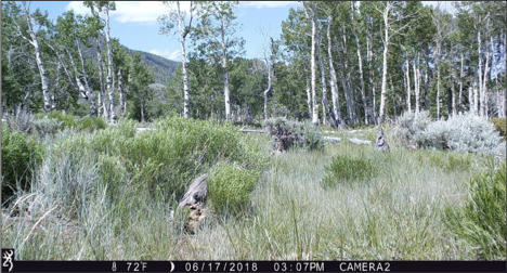 Figure 7.  Camera 2 on June 17, 2018, at 72°F. Summer starts in a few days.  Source:  Western Watersheds Project .