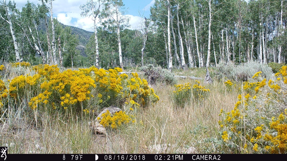 Figure 8.  Camera 2 on August 16, 2018, at 72°F. Summer well under way.  Source:  Western Watersheds Project .