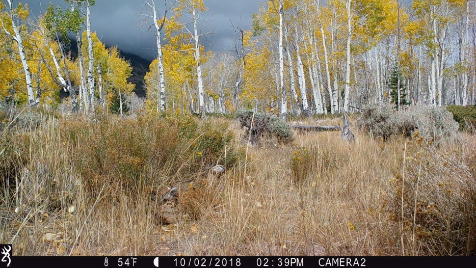 Figure 9.  Camera 2 on October 2, 2018, at 54°F. The aspens are turning and the grasses are curing, just before the cattle arrive.  Source:  Western Watersheds Project .