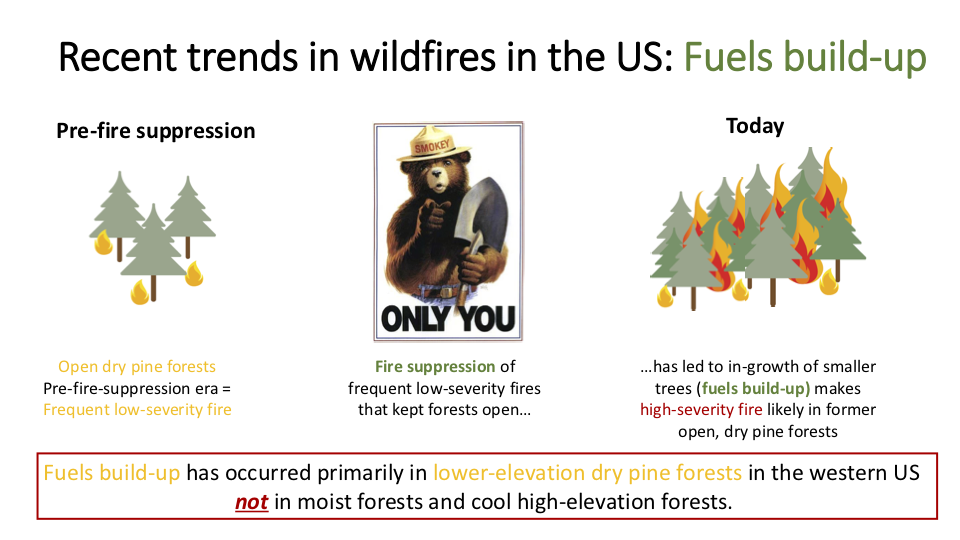 "Figure 9 . The Forest Service would have us believe that all forests in the American West are tinderboxes set to explode. However, the narrative that fire suppression has caused ""overgrown"" forests is true primarily in open ponderosa pine–dominated forests. Most forests in the American West are not such forests. Logging out the largest, most fire-resistant (and most profitable) trees has exacerbated the situation, as has the widespread grazing of domestic livestock. Finally, the most flammable ""forest"" of all is an industrial monoculture plantation of Douglas-fir ."