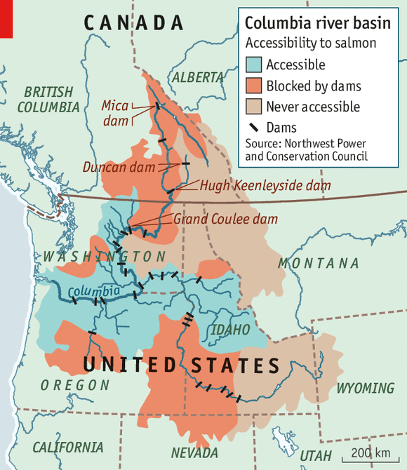 Figure 2.  Some dams block salmon migration. Others that don't block it nonetheless lethally impede both upstream returning adults and downstream juvenile migrants.  Source:  The Economist .