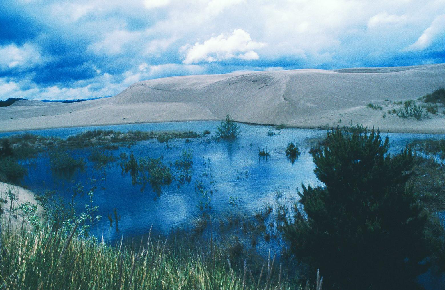 "Figure 2.  A small lake in the Oregon Dunes National Recreation Area. Under law, a ""wild and scenic river"" is a ""flowing body of water or estuary or a section, portion, or tributary thereof, including rivers, streams, creeks, runs, kills, rills, and small lakes.""   Source: Dominic DeFazio (first appeared in   Oregon Wild: Endangered Forest Wilderness  )."