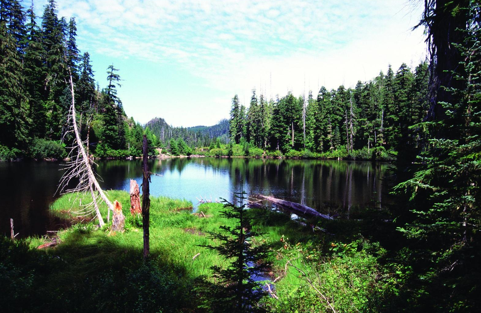 Figure 4.  Crabtree Lake in the Crabtree Valley (which contains some of the oldest known and largest trees left in Oregon) is the source of Crabtree Creek, which should be protected as a wild and scenic river . Source: David Stone, Wildland Photography (first appeared in   Oregon Wild: Endangered Forest Wilderness  ).