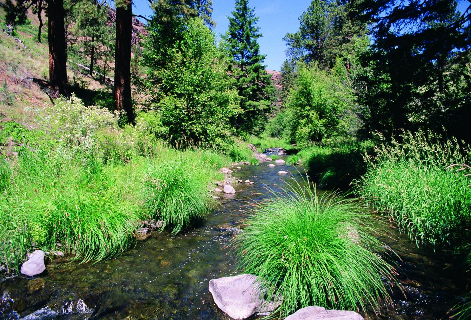 Figure 3.  The proposed Murderers Creek addition to the South Fork John Day Wild and Scenic River, which flows on the Malheur National Forest and through the Murderer's Creek Wildlife Management Area . Source: Sandy Lonsdale (first appeared in   Oregon Wild: Endangered Forest Wilderness  ).