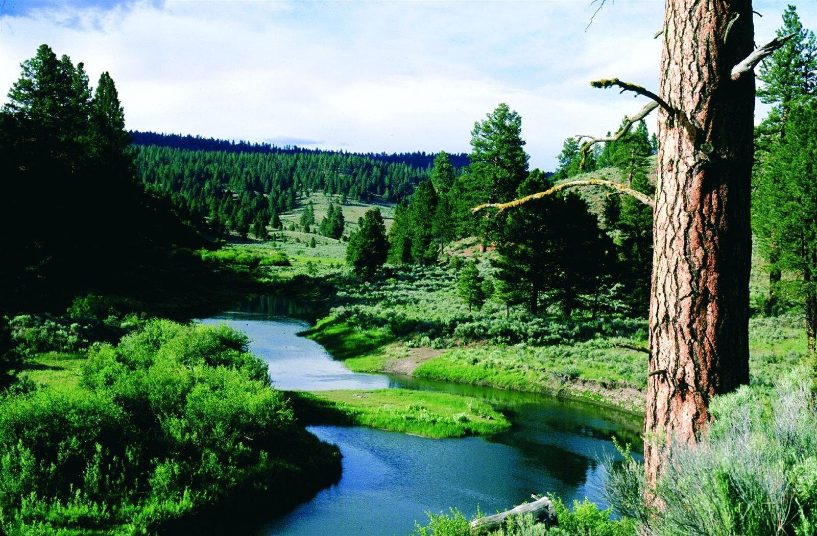 Figure 1. The proposed Silvies Wild and Scenic River. Source: Sandy Lonsdale (first appeared in   Oregon Wild: Endangered Forest Wilderness  ).