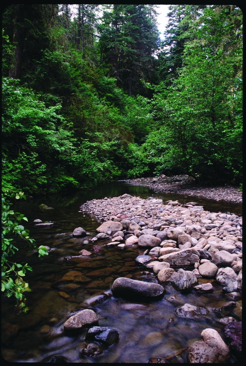 - Figure 2. The South Fork Umatilla River in the proposed Forks of the Umatilla Wild and Scenic River and also in the Hellhole Roadless Area. A trail parallels the stream, which supports imperiled salmonids (salmon, steelhead, etc.) Source: George Wuerthner (first appeared in Oregon Wild: Endangered Forest Wilderness).