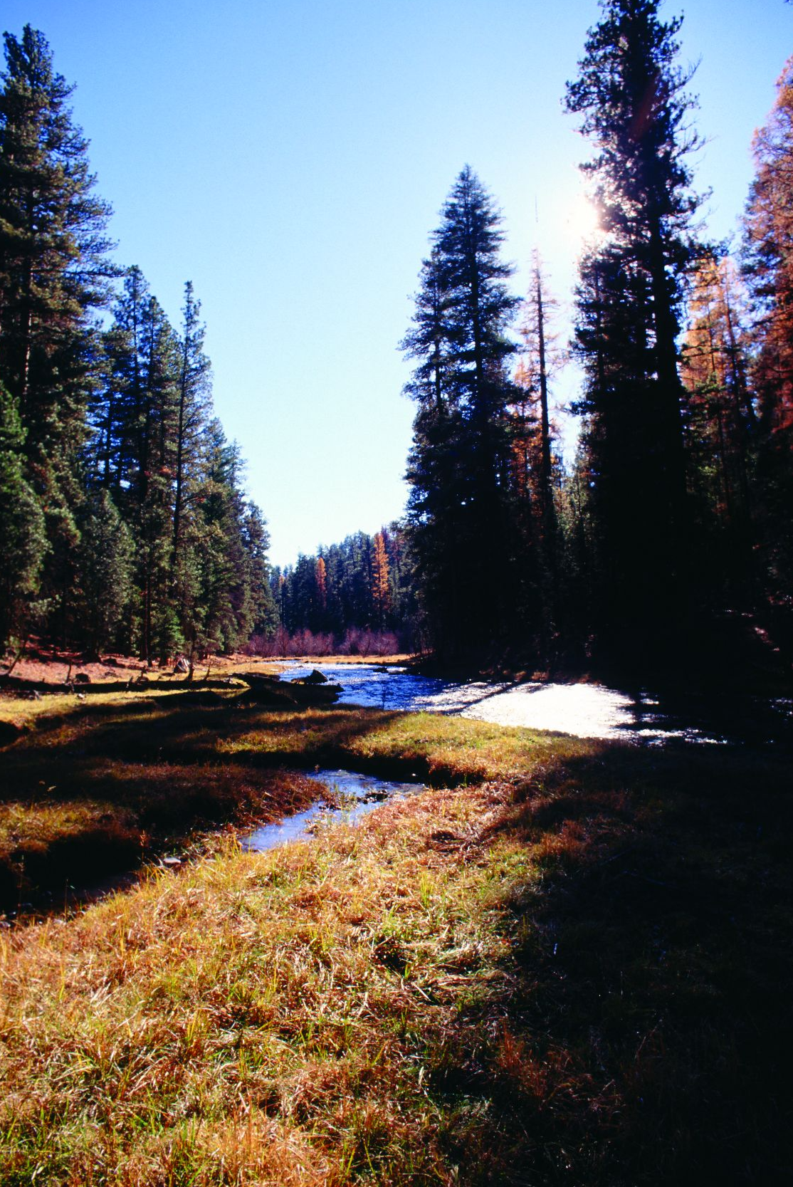 """- Figure 3. The North Fork Malheur Wild and Scenic River, established in 1988. Not only should additional mainstem below the national forest boundary be added, but also should its Bear Creek and Sheep Creek tributaries. In addition, a segment of the mainstem that is currently classified as """"scenic"""" should be upgraded to """"wild."""" Source: Sandy Lonsdale (first appeared in Oregon Wild: Endangered Forest Wilderness)."""