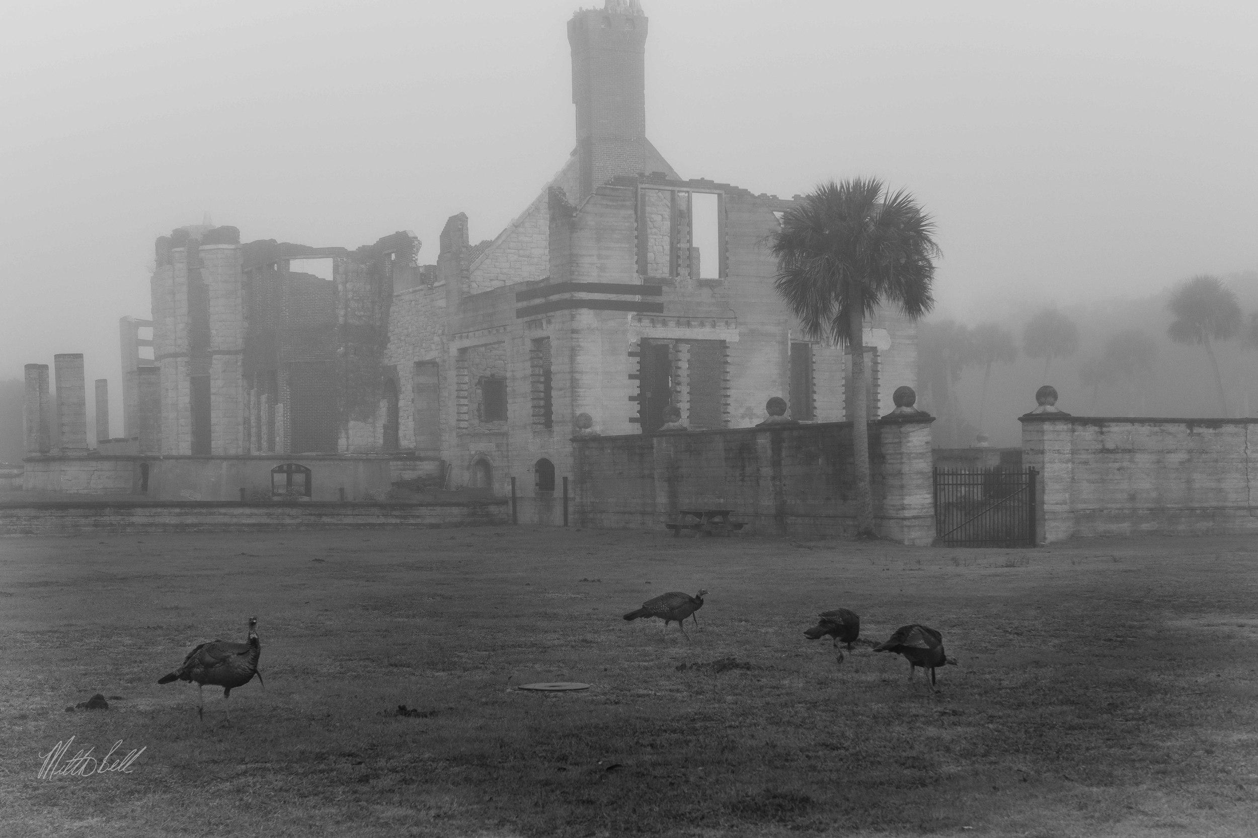turkeys at dungeness bw copy.jpg