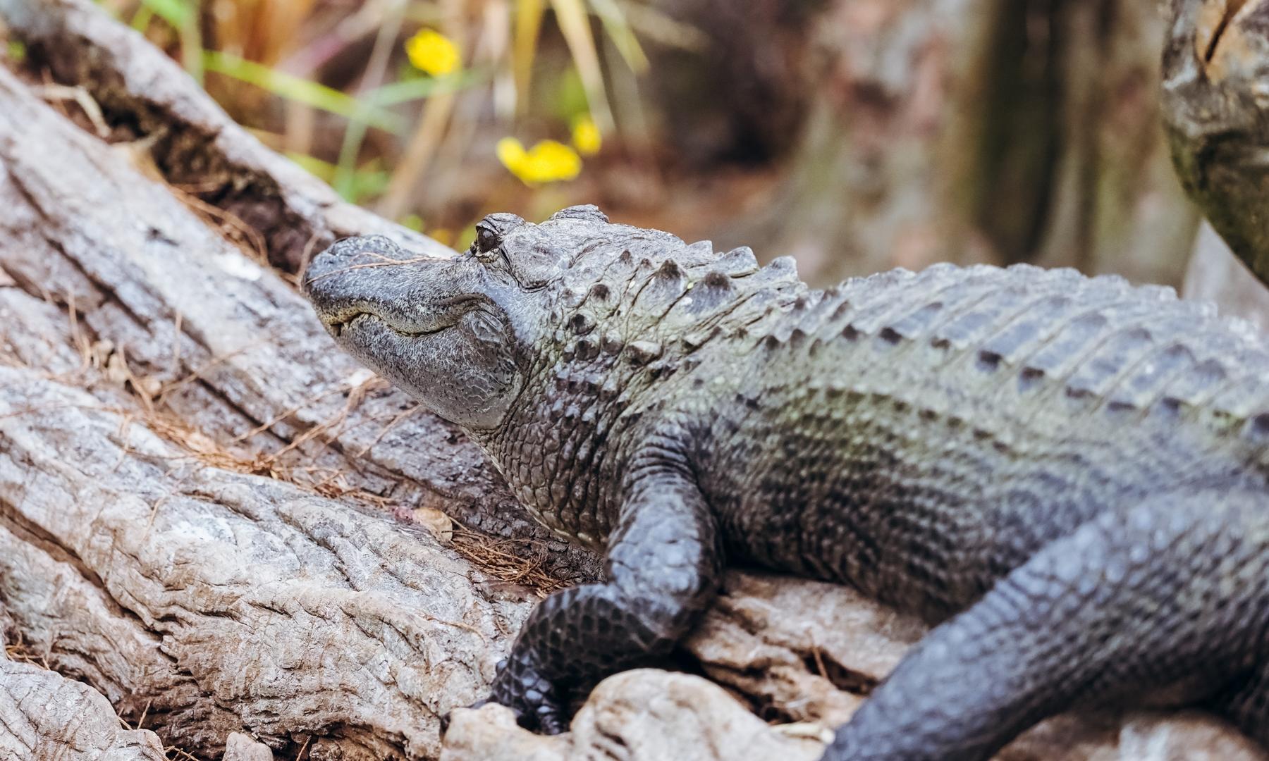 WBrawley_GC_Okefenokee16-Wildlife-117.jpg