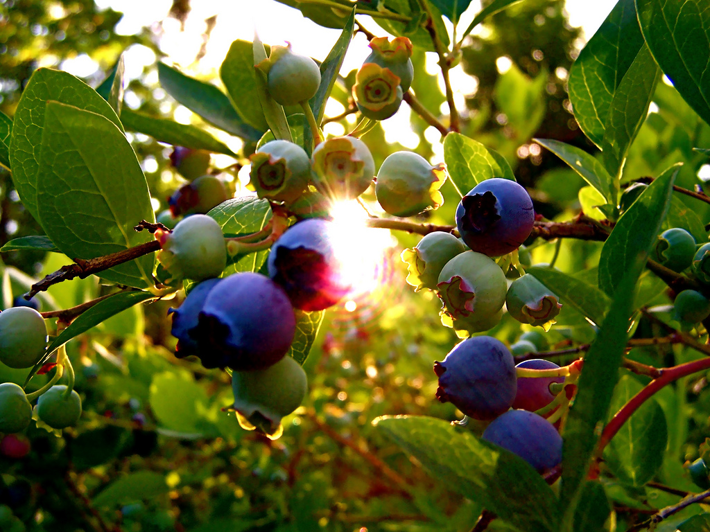 Paulding and Blueberry Day Hike.jpg
