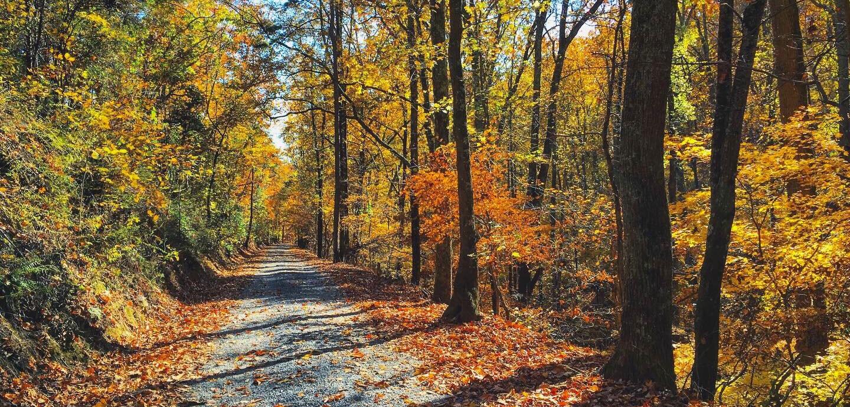 Rural+Floyd+County+Road.jpg