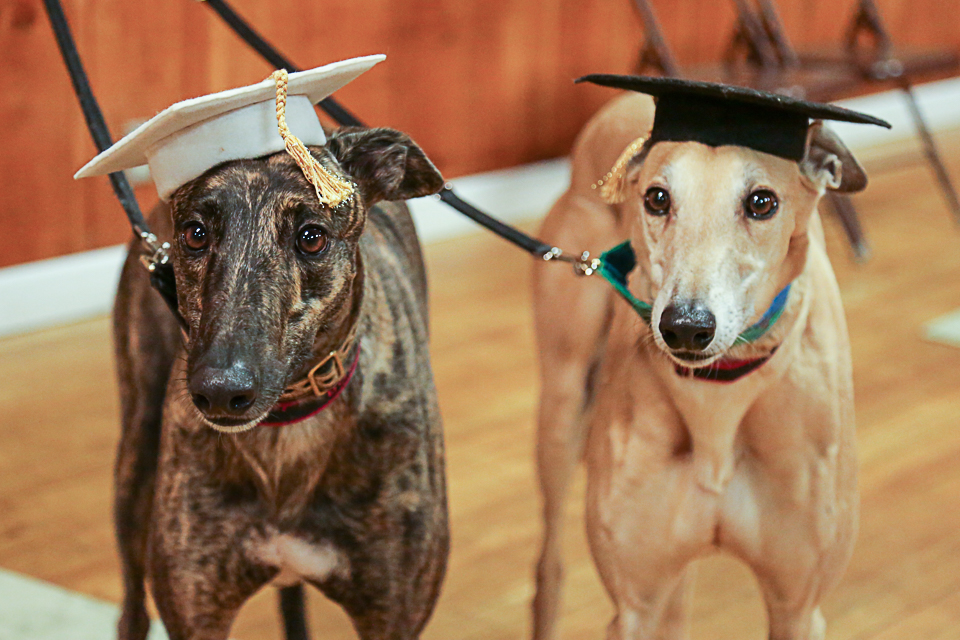 Bowie and Goose, Good Dog Class graduates