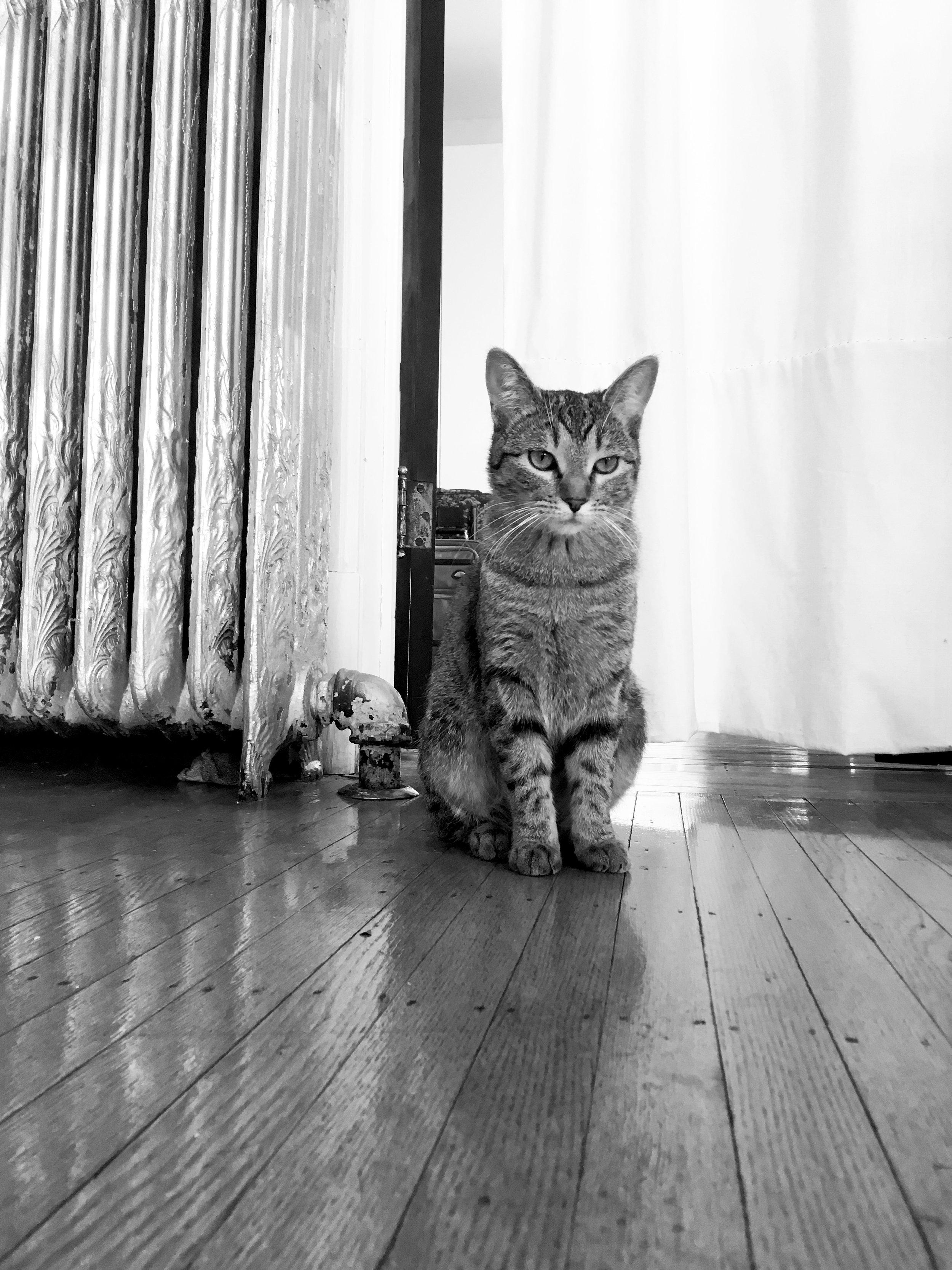 My kitten, Toasty.