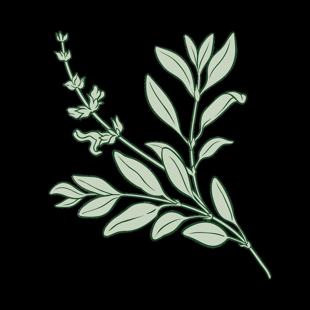 SW Sage plants.png