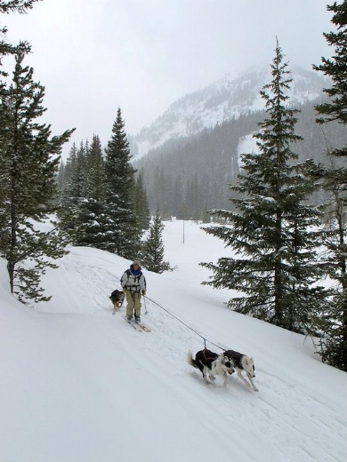 Dogs can be on a leash or off a leash on the ski trail