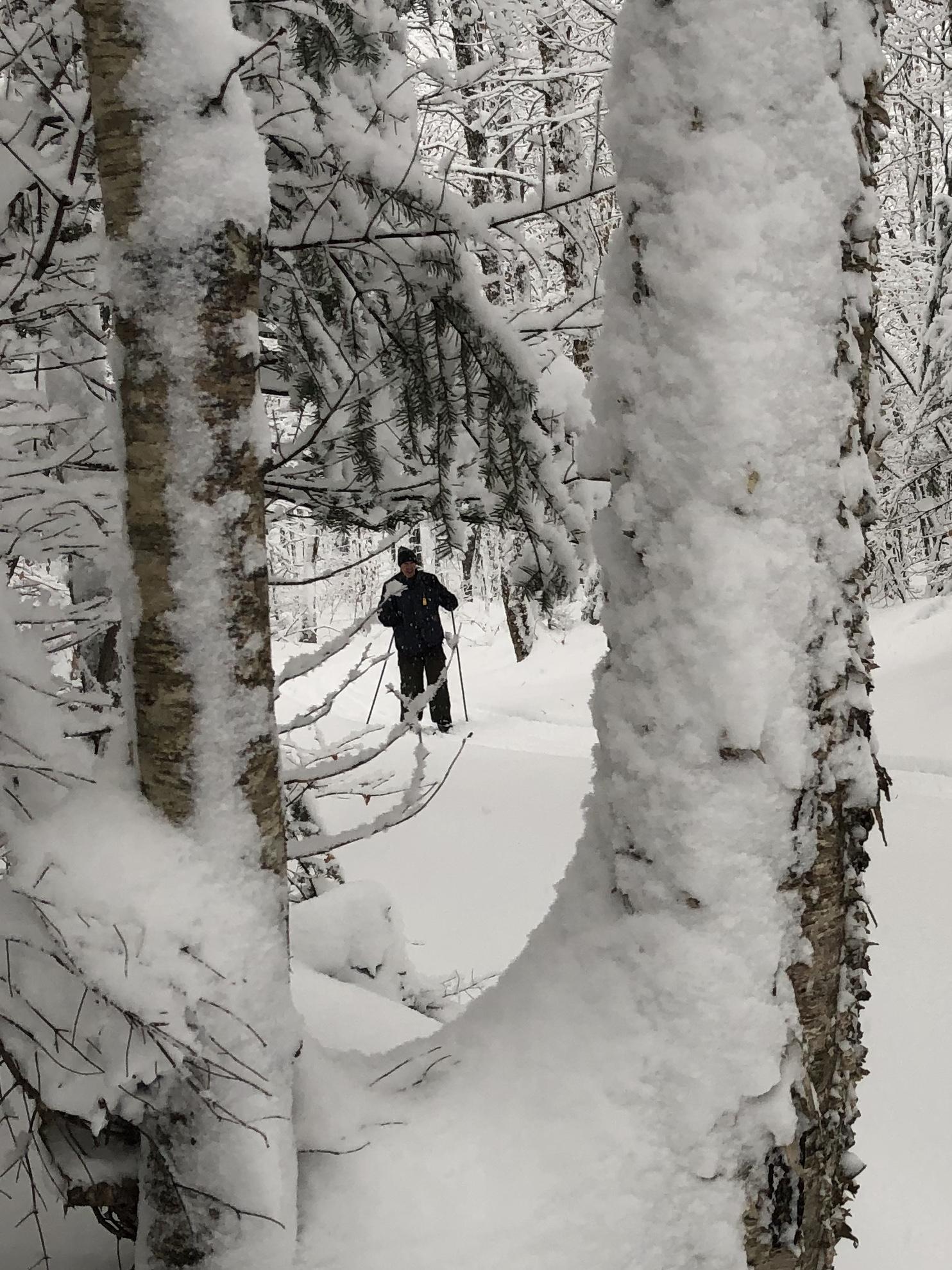 XC-ski-thru-trees.jpg