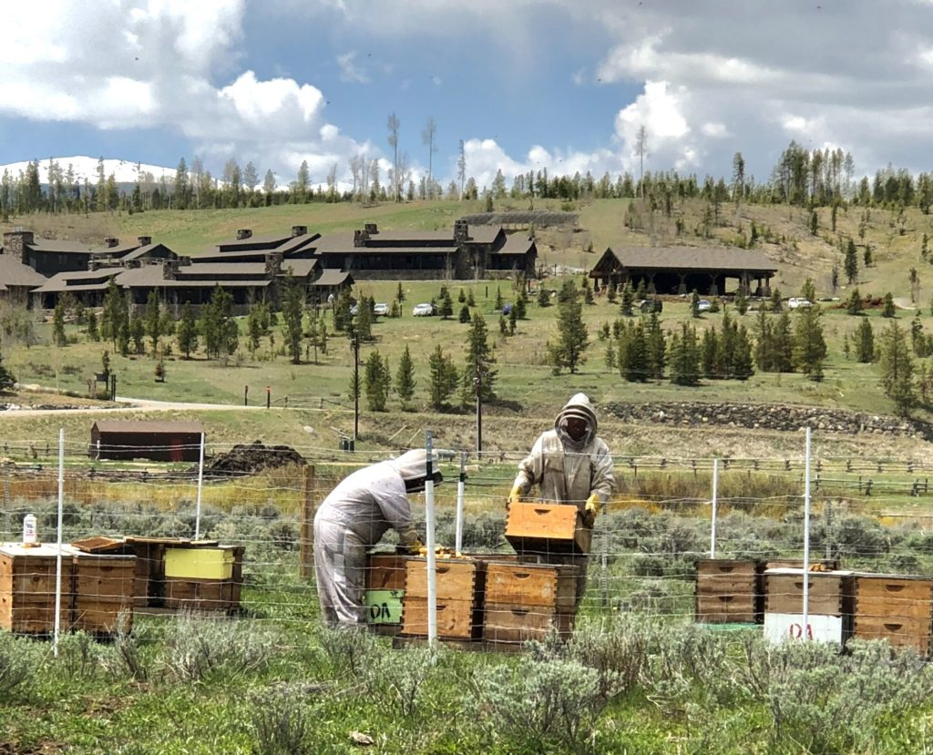 Harvesting honey at Devil's Thumb