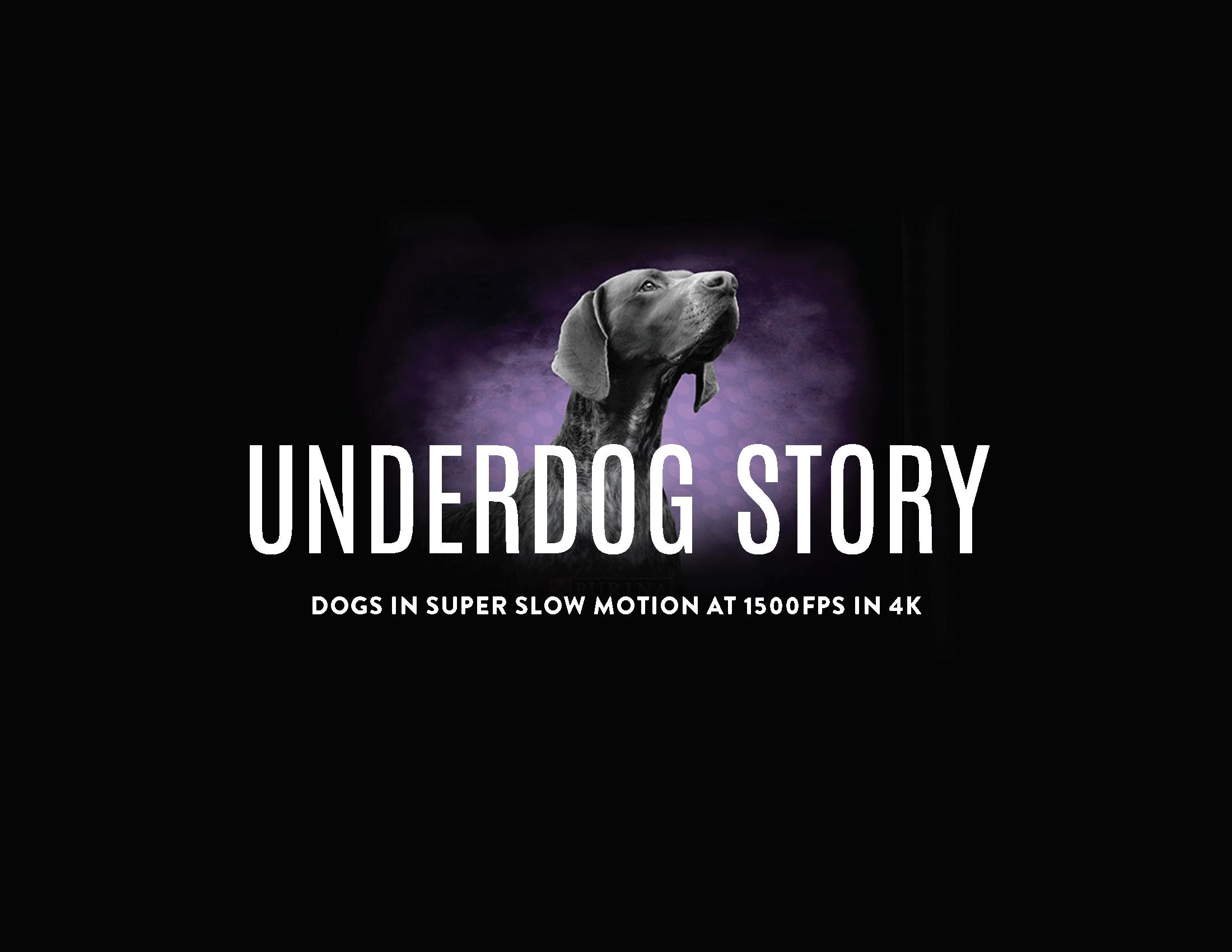 Underdog Deck_Page_01.png