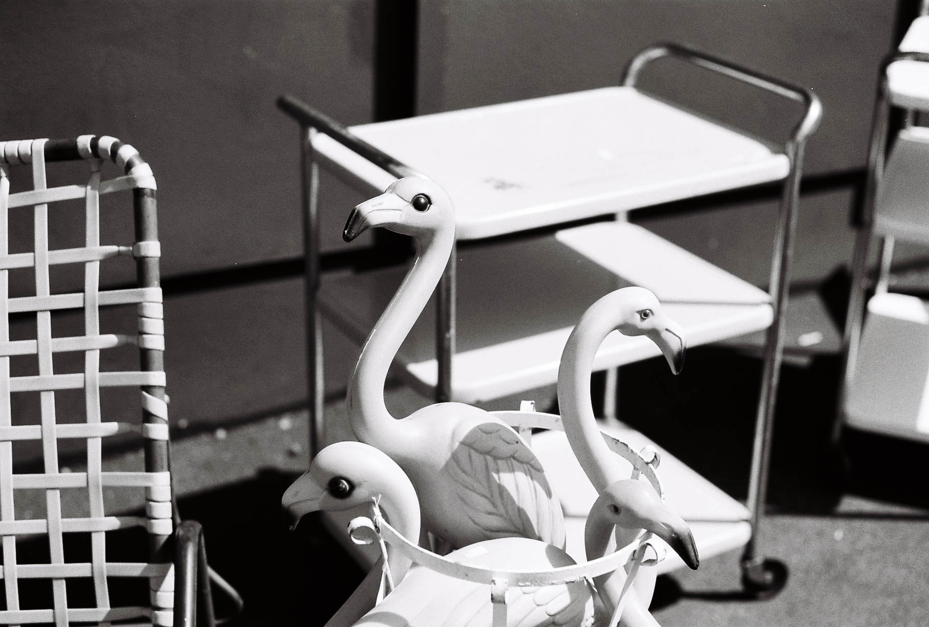 Vintage Yard Flamingos - Summicron 50mm f2 + Kodak Tmax 100
